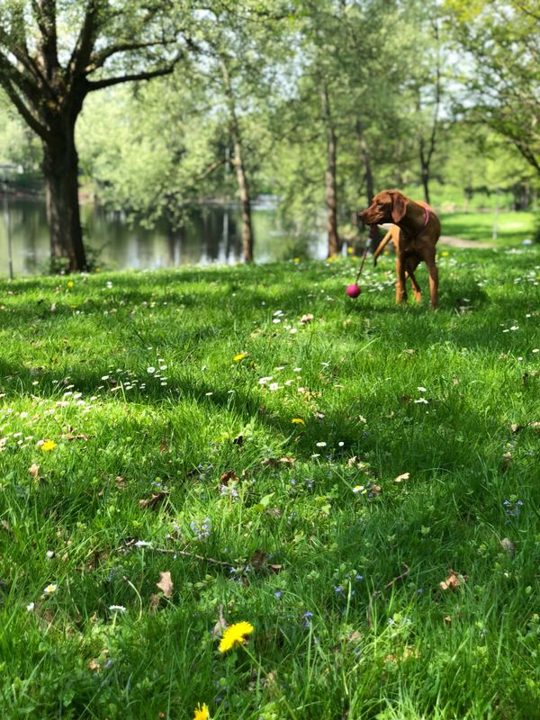 Suche Hundebetreuung-/Gassiservice » Tierbetreuung