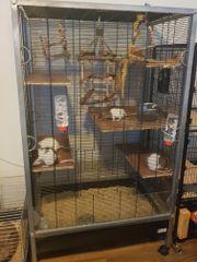 3 Rattenmädchen mit