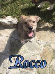 Rocco,4Monate alt