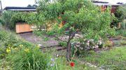 Gartengrundstück in Wolgast -