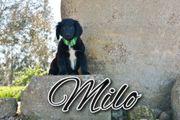 Milo möchte endlich ein Zuhause