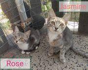 Rose und Jasmin suchen zusammen
