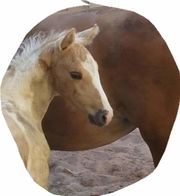 Paint, Quarter, Palomino,