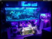 Meerwasser Aquarium Koralle ca500 l