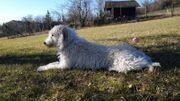 Hund Mischling weiblich 1 Jahr