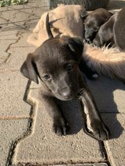 Hundewelpe Babyhund Hundebaby