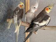 Vögel und Käfig