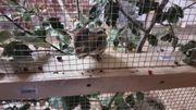 Chinesische Baumstreifenhörnchen