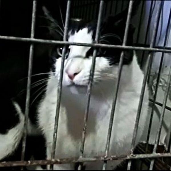 Leandro - aus dem Käfig in