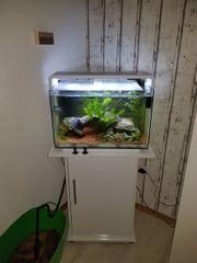 SuperFish Aquarium Home