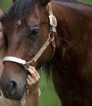 Bildhübsche Quarter Horse Stute