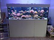 meerwasseraquarium XXL