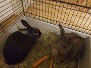 2 liebenswerte Kaninchen