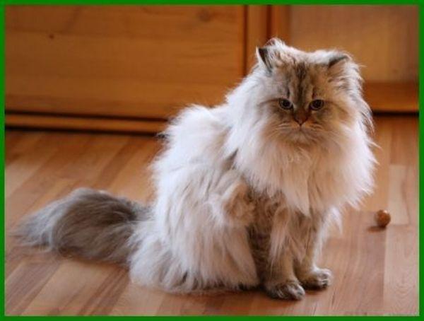 Max, ca. 1 » Katzen