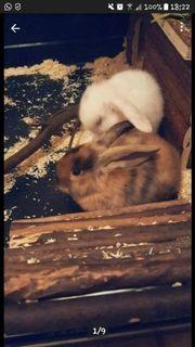 Kaninchen Geschwister
