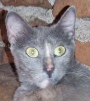 Hope - wunderschöne Katzendame