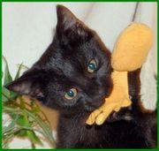 Zorro, Geburt: September