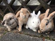 Kinderliebe zutrauliche Kaninchen