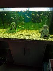 Aquarium inkl. Unterschrank &