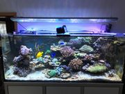 Aquarium Meerwasser Meerwasseraquarium