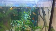 achteck aquarium