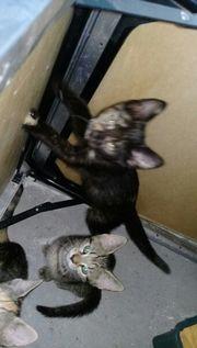 2 katzenbabys
