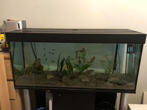 Aquarium zu verkaufen » Fische, Aquaristik
