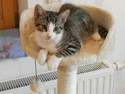 3 unvergleichlich niedliche Kätzchen suchen