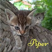 Piper (Katze aus