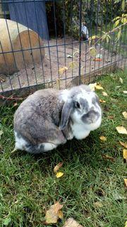 Kaninchendame sucht neues