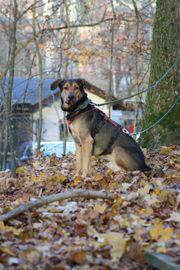 LOKI - sensibler Hundebub sucht seine