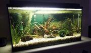 60l Aquarium Komplett