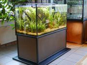 Aquarium mit Skalaren komplett eingerichtet
