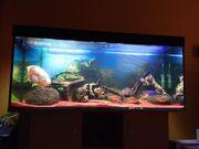Aquarium 400l + Eheim
