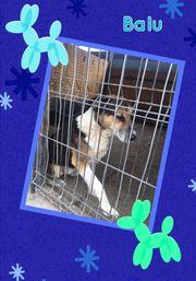 Balu Sitzt flehend am Gitter