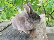 Kaninchenweibchen und Jungtiere