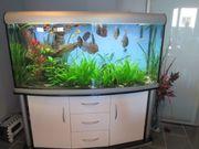 Aquarium Tiere und Pflanzen