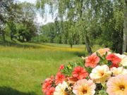 Frühlingserwachen im Odenwald