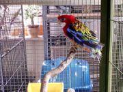 Tierpension für Reptilien Papagei u