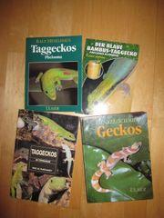 Terraristik Gecko Bücher