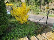 Wohloase Gartengrundstück