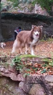 Hundesitter in Maximiliansau