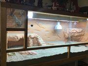Terrarium Eigenbau 150x60x60 inkl Beleuchtung