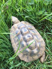 Schildkröten suchen neues