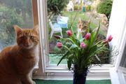 Lily und Simba -