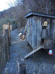 Hühnerstall Deluxe mit Zaun und