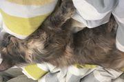 Katze Molly wird