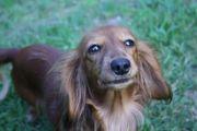 Professionelle Hundebetreuung