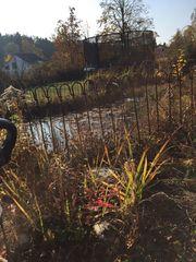 Gartenteich In Weiterstadt Pflanzen Garten Gunstige Angebote
