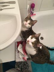 Liebevolles Zuhause für 2 Katzen